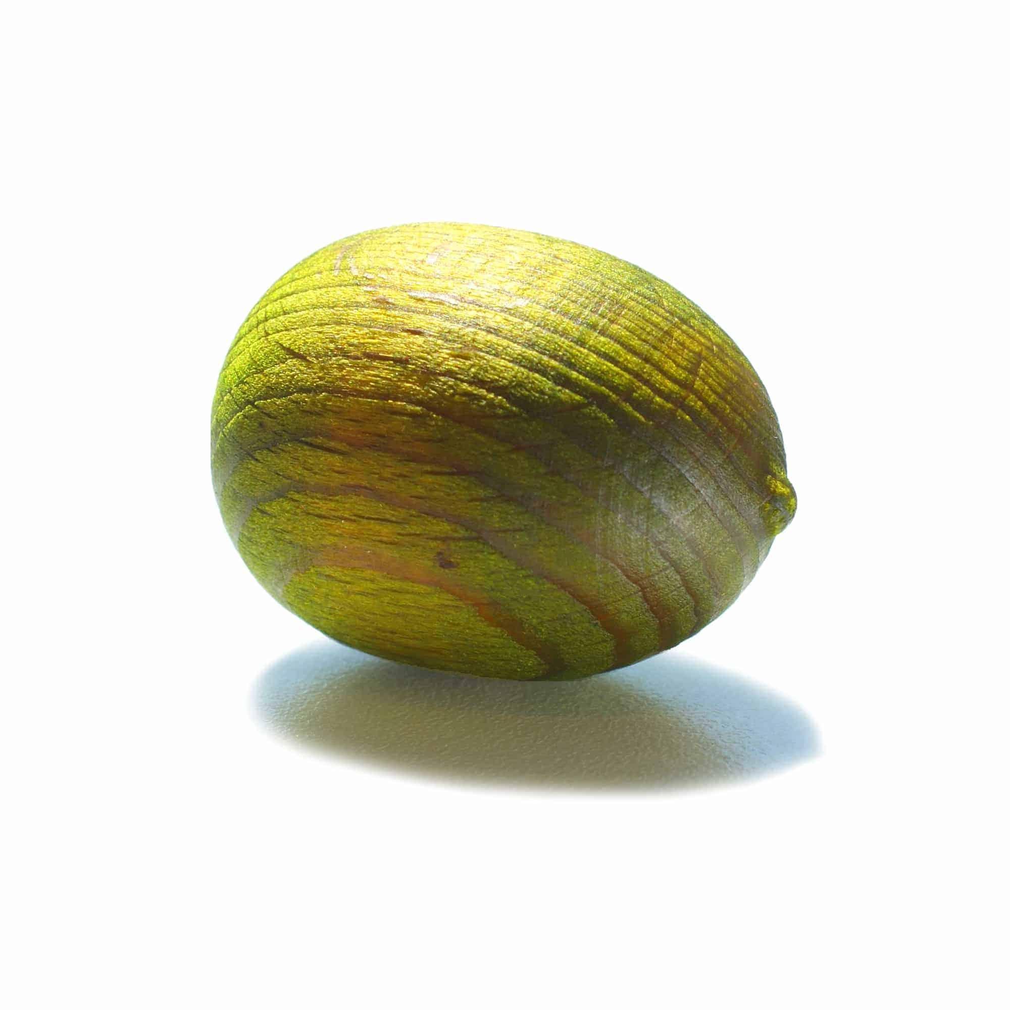 Duftfrucht Kiwi